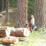 She Cuts It Tree Service   Roy WA 253-720-2989