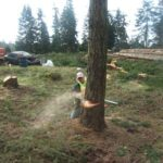 She Cuts It Tree Service | Roy WA 253-720-2989